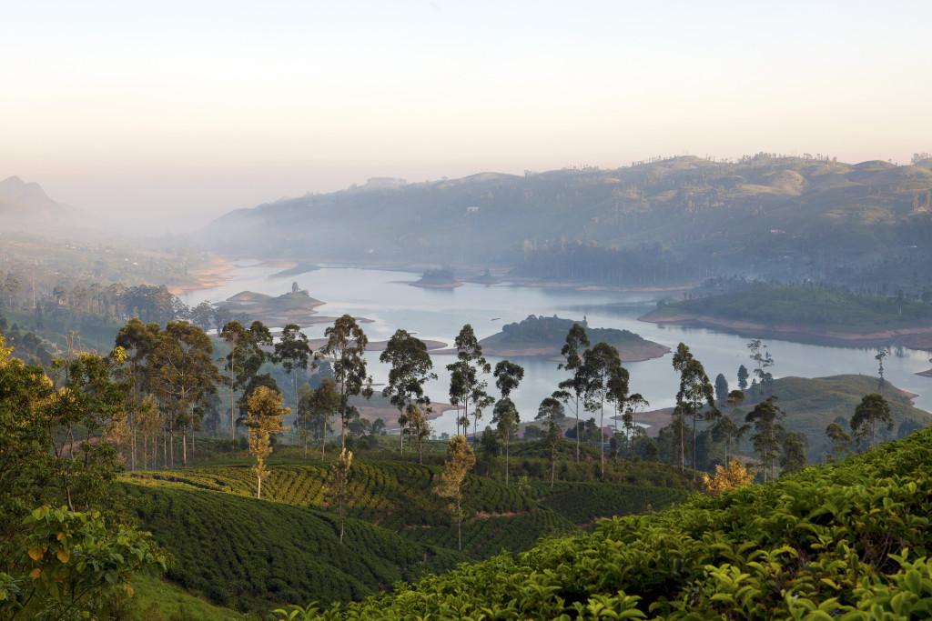 Romantic Tea Trails