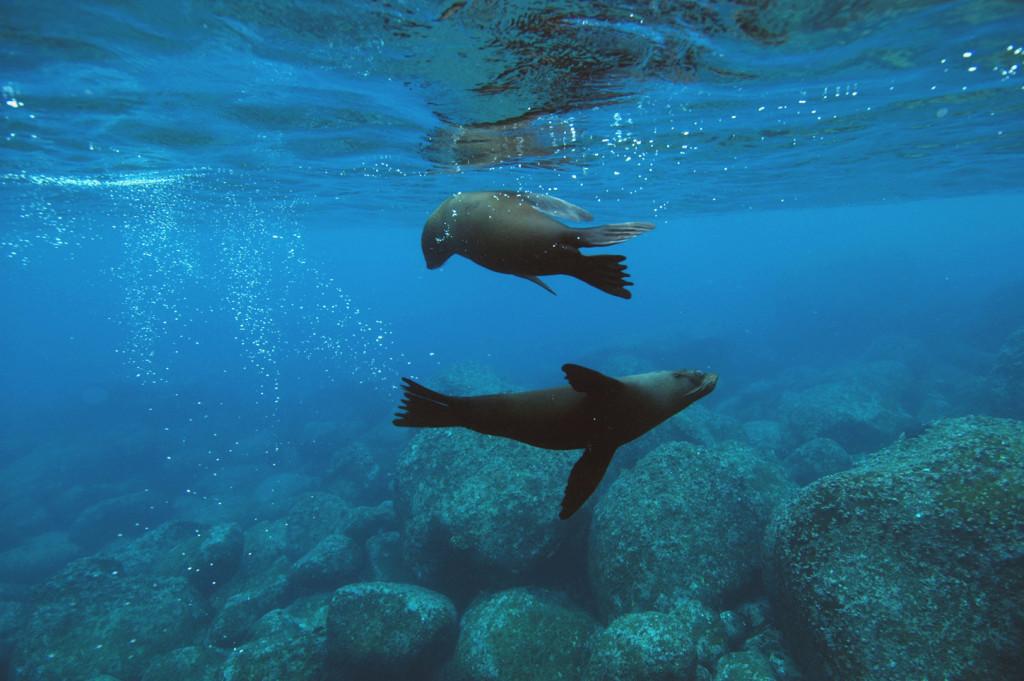 Galápagos - Fauna